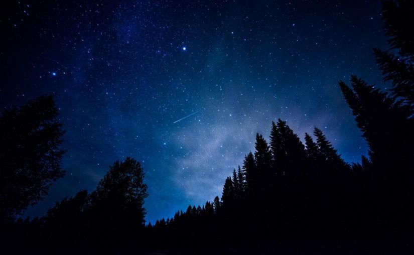 Звездное небо в августе в лесу